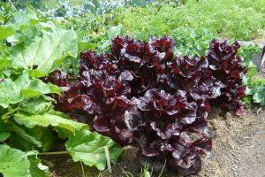 Salát se podporuje s okurkami a mrkví. foto: Lucie Peukertová