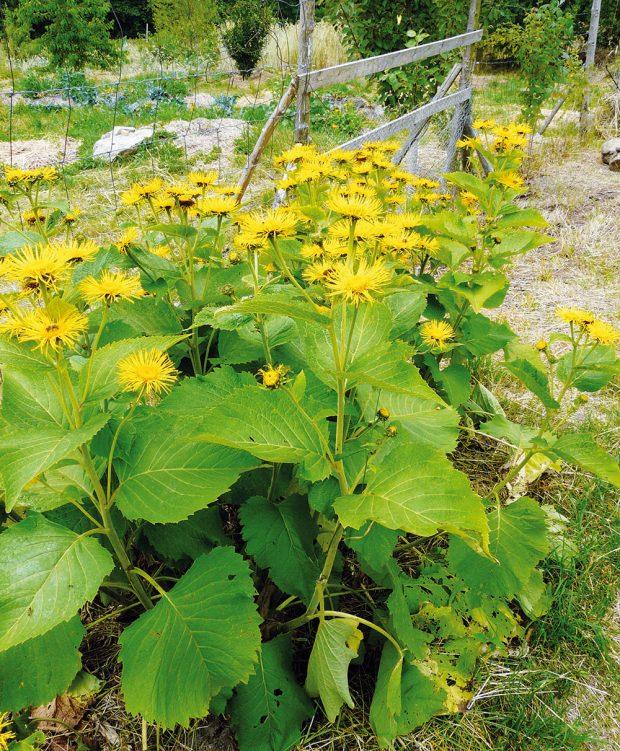 Uplatnění rostlin užitečných pro hmyz. FOTO LUCIE PEUKERTOVÁ