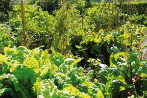 I zeleninová zahrada malých rozměrů dokáže zajistit bohatou sklizeň, takže pokryje většinu vaší roční spotřeby. Chce to jen trochu více plánovat. FOTO LUCIE PEUKERTOVÁ