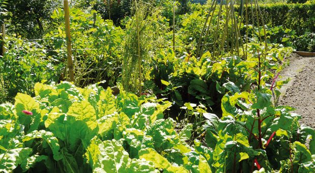 Jak využít svou zahradu na maximum