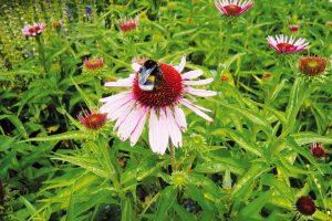 Abyste si ušetřili co nejvíce práce, omezte použití syntetických přípravků na ochranu rostlin, příroda pak začne fungovat ve váš prospěch. FOTO LUCIE PEUKERTOVÁ