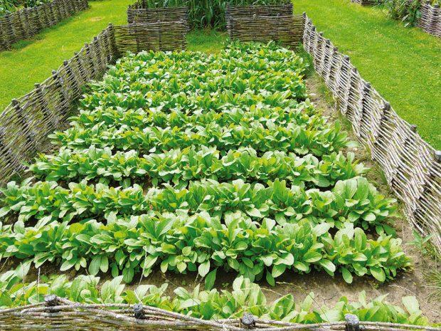 PěstovánÍ zeleniny si nemusíte odpustit ani vpřípadě, že vám po pozemku běhá pes. Stačí záhony jen šikovně ohraničit. FOTO LUCIE PEUKERTOVÁ