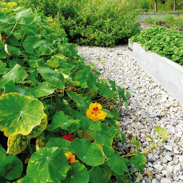Léčivé rostliny poslouží jako koření ido léčivých nálevů, ale stejně tak mohou být součástí bylinné jíchy na ošetření zahrady. FOTO LUCIE PEUKERTOVÁ