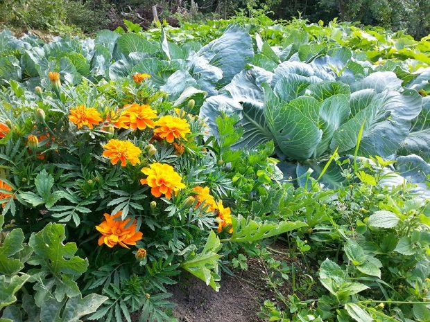 Zahrada na podzim: Co byste ještě měli udělat