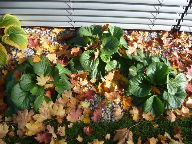 Přístup ke spadanému listí ve výsadbách se výrazně liší, ne vždy je třeba ho uklízet. foto: Lucie Peukertová