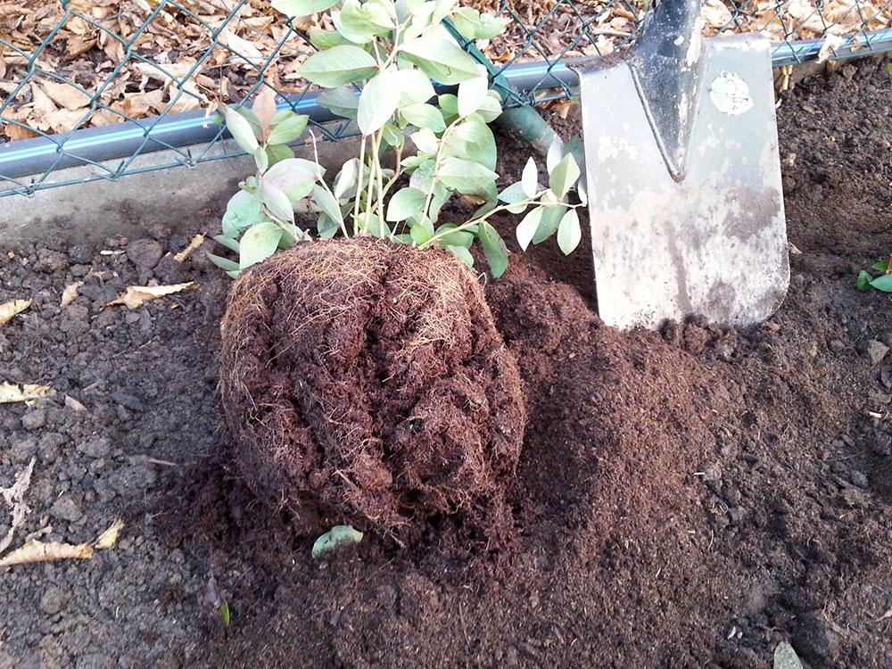 97fd9787f80 Podzim je ideální termín pro výsadbu ovocných dřevin. foto  Lucie Peukertová