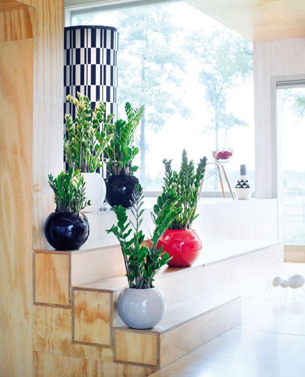 Živé květiny jsou pro většinu znás přirozeným doplňkem interiéru. Rostliny volíme nenáročné na péči ina zálivku adobře promyslíme jejich umístění, vzhledem kpožadavkům jednotlivých druhů. FOTO BLOEMENBUREAU HOLLAND