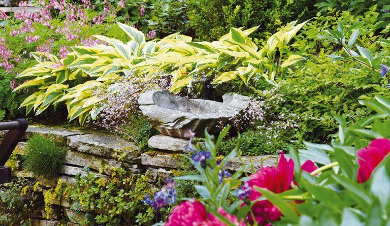 Zamokřená půda, stín, svah: Jak si poradit s náročnými podmínkami na zahradě