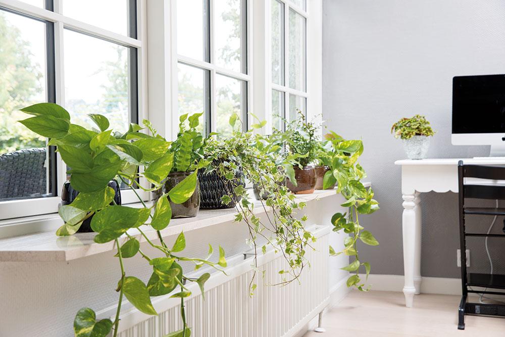zřejmé tipy na pěstování rostlin jaký je nejlepší způsob, jak napsat online seznamka