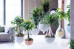 Hra sinteriérovými rostlinami může být opravdu pestrá. Je tolik možností, jak rostliny umístit,, pokud se postaráme ovhodné podmínky pro jejich růst.