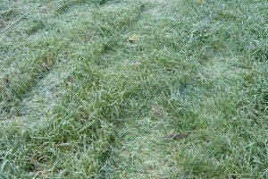 Na přemrzlý trávník pokud možno už vůbec nevstupujte. foto: Lucie Peukertová