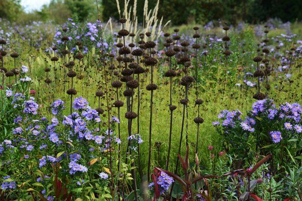 Suché semeníky trvalek se doplňují s okolními druhy květin. foto: Lucie Peukertová