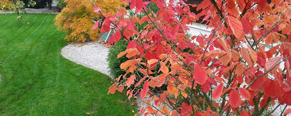Které rostliny jsou stvořené pro podzim?
