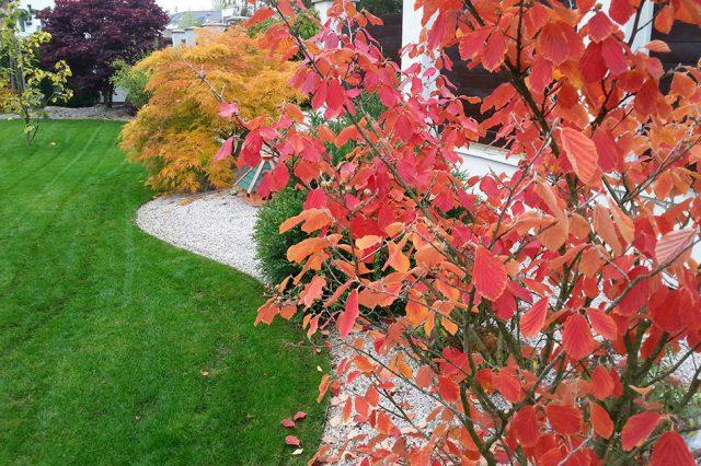 Zahradu plánujte i s ohledem na podzim, kdy by se mohly vybrané rostliny zajímavě barvit. foto: Lucie Peukertová