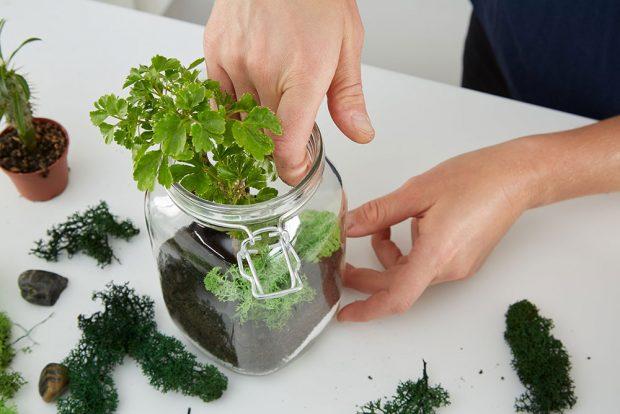 Je-li nádoba dost velká, můžeme kombinovat více druhů. Potom pečlivě pokryjeme kořeny zeminou. Foto MÖBELIX