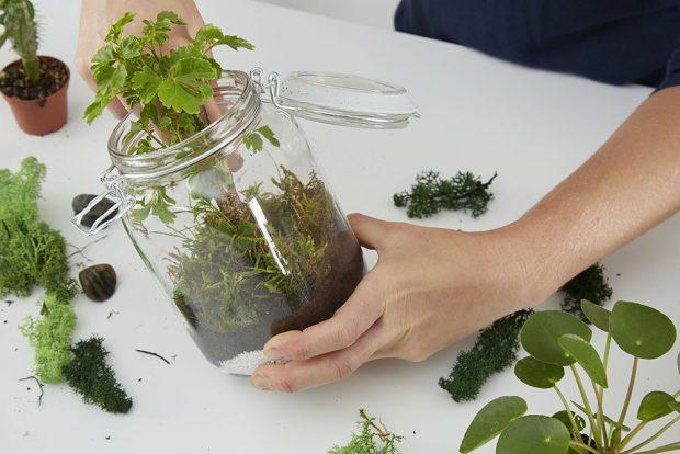 Rostlinky by neměly být vnádobě vedle sebe příliš natěsno, protože některé ještě pořádně vyrostou. Následuje vrstva mechu. Foto MÖBELIX