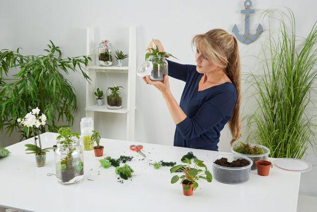 Můžeme použít čerstvý mech zlesa, nebo sušený zkvětinářství. Anaše malé rostlinné terárium či florárium je hotovo. Tuto lacinou apěknou okrasnou zahrádku lze ibez pozemku pěstovat po celý rok! Foto MÖBELIX