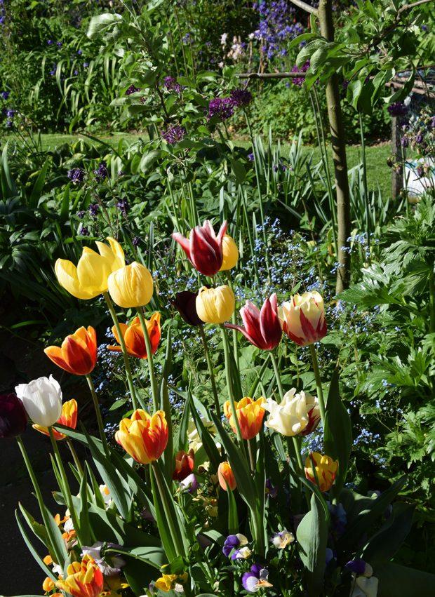 Květiny venkovské zahradě dodávají kouzlo barev i proměnlivost. foto: Lucie Peukertová