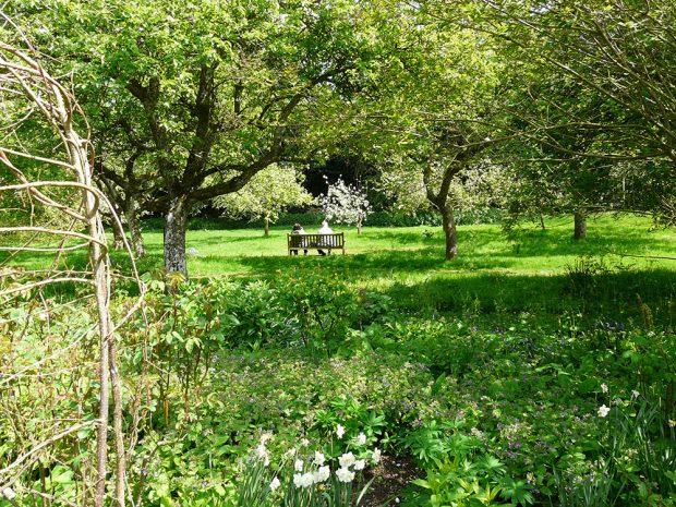 Ovocný sad se do českých zahrad vrací jako okrasný i užitečný prvek. foto: Lucie Peukertová