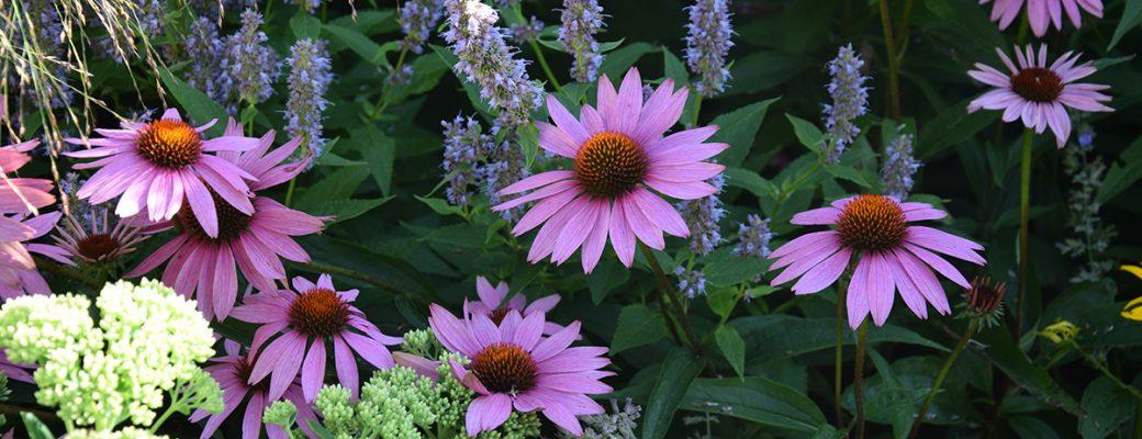 Plánování zahrady svépomocí a jak na ni