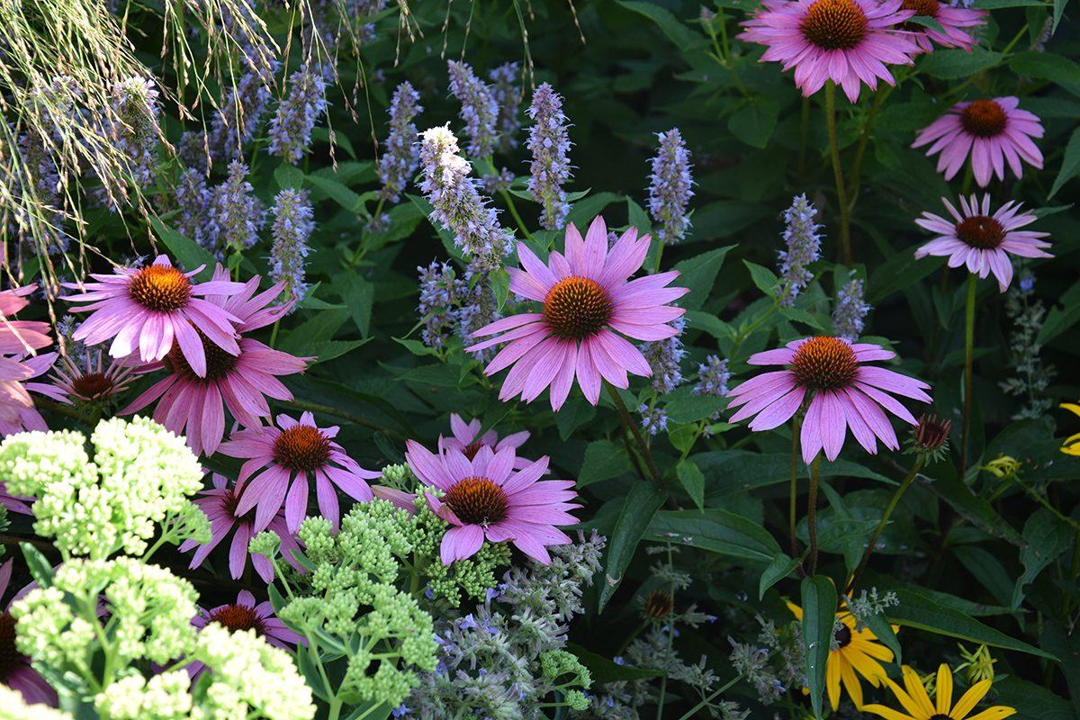 Plánování trvalkových záhonů má svá specifika, ještě než se pustíte do práce, zjistěte si o rostlinách co nejvíce informací.