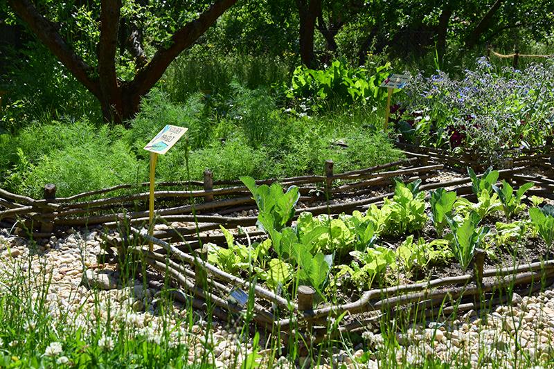 V zeleninové zahradě je vhodné nad osazovacímni postupy přemýšlet, některé druhy zeleniny se totiž po sobě nesnesou.