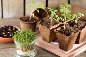 Jaké druhy zeleniny si můžeme v zimě vypěstovat doma?