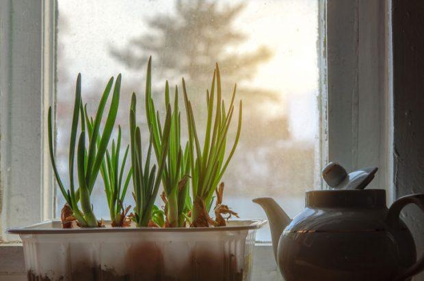 Foto iStock.com
