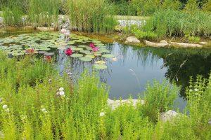 Vody je stále méně, proto bychom měli uvažovat nad její spotřebou na zahradě ivdomácnosti. FOTO LUCIE PEUKERTOVÁ