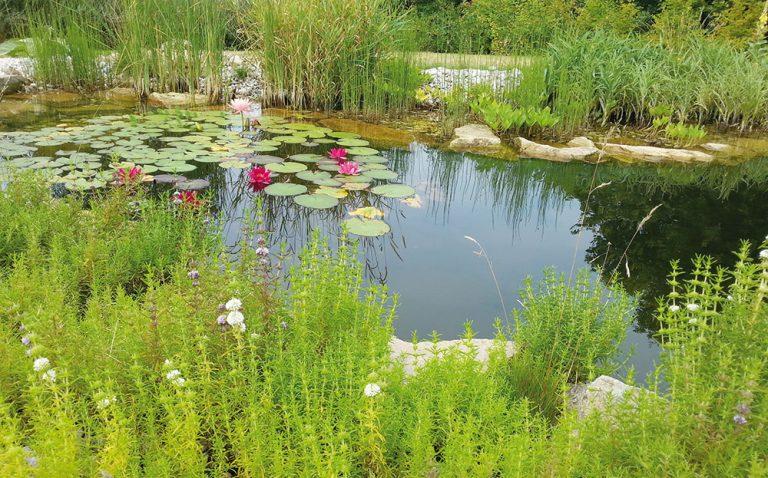 I vaše zahrada muže smysluplně hospodařit s vodou