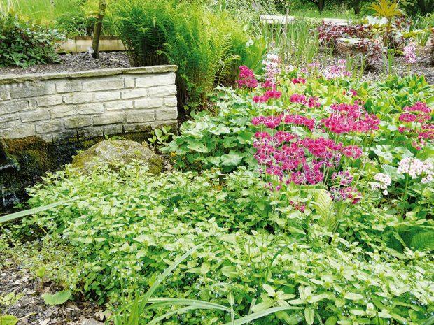 Dešťová zahrada umožňuje vsakování srážkové vody do podloží, čímž výrazně ovlivňuje mikroklima zahrady. FOTO LUCIE PEUKERTOVÁ