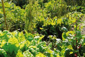 Ipěstování zeleniny vhustém zápoji dokáže vodu vpůdě ušetřit. FOTO LUCIE PEUKERTOVÁ