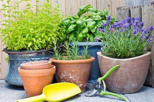 Čerstvé bylinky i v zimě? Přesuňte je ze zahrady do kuchyně!