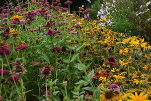 Naplánujte si letničkové záhony, které dodají zahradě šťávu