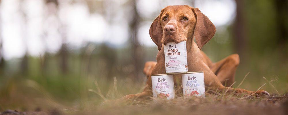 SOUTĚŽ HOME – Soutěž o 5x balení konzerv BRIT pro psy