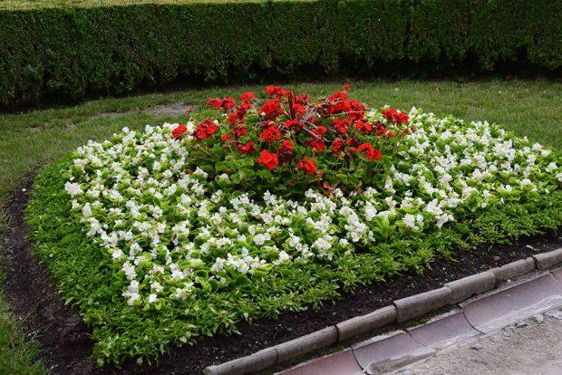 Na rodinných zahradách se s ornamentálními výsadbami nesetkáme, mnohem oblíbenější jsou letničky k řezu nebo výsadby divokého charakteru. foto Lucie Peukertová
