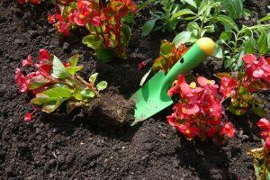 Sadbu letniček si snadno vypěstujete ze semen. Už během zimy si naplánujte, jaké druhy budete pěstovat. foto Lucie Peukertová