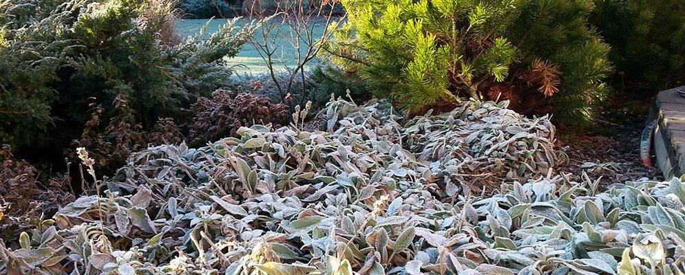 Rostliny, kterým ani zima neubere na kráse