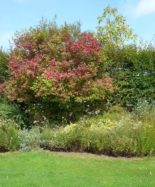 V přírodních zahradách se spíše setkáte s volně rostlým živým plotem než s tím striktně tvarovaným. foto Lucie Peukertová