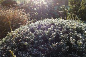 V zimě nejvíce oceníte ty druhy rostlin, které nabídnou zajímavé barvy. Foto Lucie Peukertová