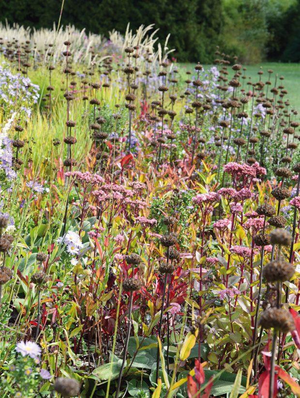 Při tvorbě zahrady se mnohdy zapomíná na trvalky, které vytvářejí zajímavé semeníky, ty zahradě dodají nevšední krásu i tehdy, když zrovna nekvetou. FOTO LUCIE PEUKERTOVÁ