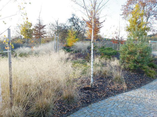 Abyste se na zahradě dočkali zimního efektu trav, nesmíte je na podzim z výsadeb odstranit. FOTO LUCIE PEUKERTOVÁ
