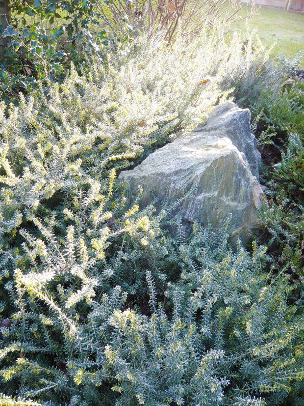 V celoročně krásné zahradě je třeba se zaměřit na zajímavé kombinace materiálů a rostlin. FOTO LUCIE PEUKERTOVÁ