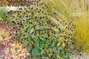 Přes zimu je třeba ve výsadbách ponechat trvalky s okrasnými semeníky. FOTO LUCIE PEUKERTOVÁ