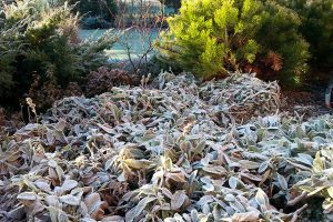 Jak si prodloužit krásu zahrady na celú rok
