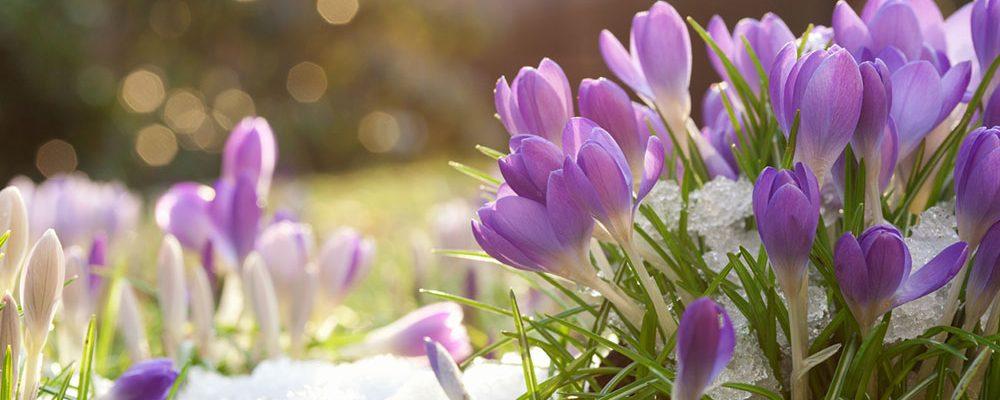 Jaké práce si na tento měsíc naplánovat v okrasné zahradě?