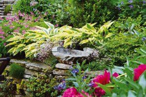 Trvalky okrasné listem mohou být příjemným zpestřením zahradní kompozice ve stínu ina slunci. FOTO LUCIE PEUKERTOVÁ