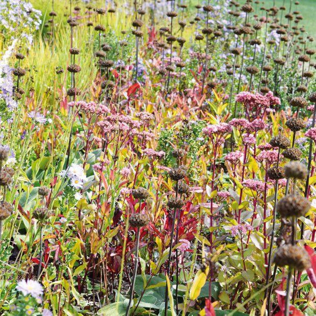 Na trhu seženete mnoho trvalek, které jsou nejkrásnější během podzimu. FOTO LUCIE PEUKERTOVÁ