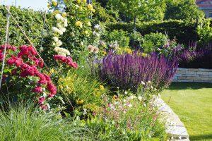 Trvalkové rabato je možné doplnit také kvetoucími dřevinami, ideálním vonným partnerem budou různé odrůdy keřových růží. FOTO LUCIE PEUKERTOVÁ
