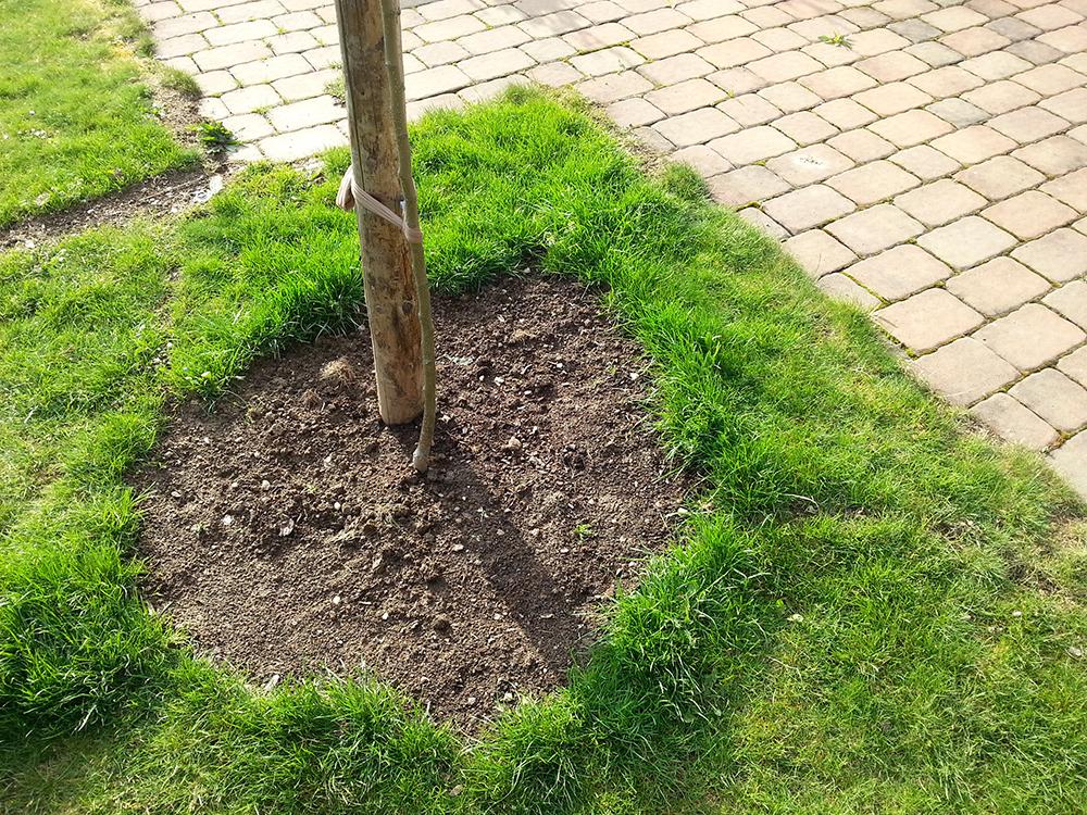 Pokud závlahovou mísu neohraničíte obrubníkem, bude nutné každý rok okraj trávníku odrýpnout.